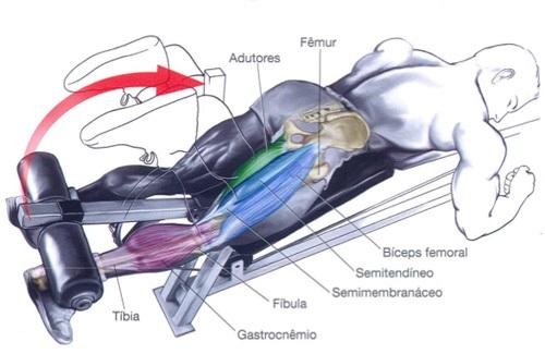 exercicios-de-força-e-hipertrofia
